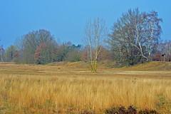 Achim Sandtrockenrasen - Grasland (akumaohz) Tags: lake grass see sand grassland rasen trocken achim niedersachsen sandtrockenrasen