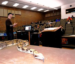 Boa in class (EcoSnake) Tags: scott education teaching boca snakes reptiles redtailboa colombianboaconstrictor