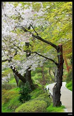 nEO_IMG_DP1U3776 (c0466art) Tags: park old trip travel flowers light green castle pool beautiful japan canon season spring scenery afternoon bloom sakura 2015 trres 1dx c0466art
