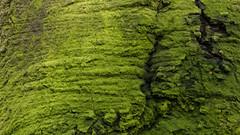 (I do wallpapers.) Tags: wallpaper nature canon photography eos flickr outdoor oldenburg naturephotography larion 700d wildenloh eos700d enerdil larionenerdil