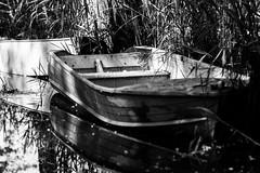 barche (miglio) Tags: lake water lago barca estate riservanaturale ef100mmf2usm lagodimontepulciano canoneos7d