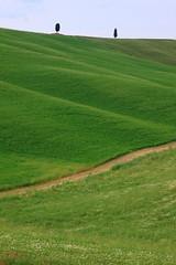 Pienza2 (FiPremo) Tags: italy verde canon europa europe italia sigma pienza montepulciano toscana albero 50d eos50d filippopremoli