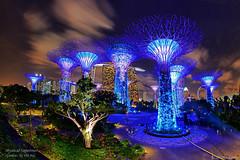 DSC_4535 (|SiLeNcE|) Tags: singapore marinabay gardensbythebay supertrees mysticalsupertrees