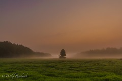 nature's guardian (D.Reichardt) Tags: morning light sunset tree fog germany landscape early europe great wideangle guardian notherngermany