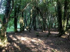 Bosque de ribera. (lumog37) Tags: trees forest landscape arboles paisaje bosque riverscape paisajefluvial