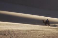 A Camel In The Gobi (El-Branden Brazil) Tags: horses asian sand asia desert buddhist pigeons dunes buddhism riding mongolia camel monks temples camels steppes gobi nomads mongolian ulaanbatar nationalgeographicworldwide