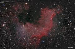 NGC7000. The North American Nebula (NightSkySteve) Tags: worthing nebula astrophotography astronomy Astrometrydotnet:status=solved Astrometrydotnet:id=supernova7494