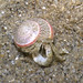 Huddling hermit crab