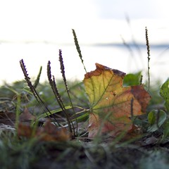 Autumn is coming (jon700) Tags: autumn sea color oslo leaf maple focus dof weekend olympus friday omd hst hvervenbukta