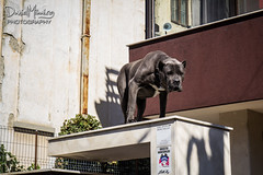 Photo from WWPW 2013 (Daniel Mihai) Tags: dog building dangerous romania angry bucharest keepout wwpw wwpw13