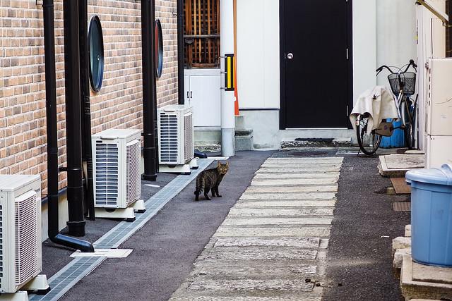 Today's Cat@2013-11-03