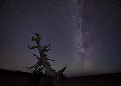 The Gnarly Tree (TheFella) Tags: travel sky usa lake tree slr nature night oregon digital america stars landscape photography lights star volcano us photo nationalpark nikon unitedstates space unitedstatesofamerica fineart hill peak astro hills nighttime photograph crater caldera astrophotography processing pacificnorthwest northamerica craterlake nightsky states peaks dslr volcanic cosmos constellation d800 milkyway postprocessing starscape travelphotography thestates thefella starphotography conormacneill thefellaphotography