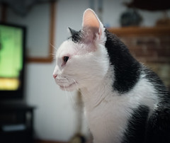 Hurricane (ehpien) Tags: usa cats cat fuji maryland bethesda dscf0766 3652013 x100s 01december2013