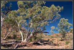 West MacDonnell Ranges (2009) (Emma White ( ... somewhere ... )) Tags: park trees west creek ellery nikon nt australia national ranges outback np northern territory macdonnell westmacdonnellnationalpark d40x thewhiteview