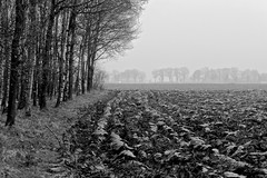 Vers geploegd . (Fijgje On/Off) Tags: trees blackandwhite monochrome fi
