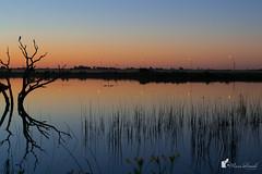 Laguna La Arocena - General Pico - La Pampa (un_cronopio) Tags: trip sunset paisajes naturaleza sun flores flower color sol nature argentina photography viajes atardeceres lapampa girasoles generalpico