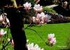 Spring - Vancouver BC (firooz_t) Tags: spring norooz مبارک سال نوروز نو