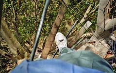 View 180' straight down from the Gloucester Tree spiral wire ladder, near Pemberton, Western Australia (aussiejeff) Tags: australia lookout wa 1994 pemberton westernaustralia gloucestertree
