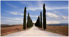 Cypress Avenue : Val d'Orcia (Giovanni Giannandrea) Tags: tuscany cypress avenue landscape italy toscana italia valdorcia cretesenese sanquiricodorcia gladiator