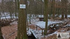 Am Josefsbrünnelche im Binger Wald