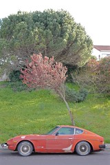 super orange sports car and it's personal red tree (Lynn Friedman) Tags: nobody favstock soft california 94015 dalycity sportscar red orange tree bent unintentionallyfunny restoration patches park street vertical outside landscape