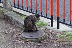 Today's Cat@2017-03-16 (masatsu) Tags: cat thebiggestgroupwithonlycats catspotting pentax mx1