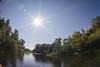 Taubergießen (SpotShot) Tags: sony a7 ilce7 sonya7 zenitar 16mm f28 16 zenitar16mmf28 fisheye taubergiesen flare sun sonne