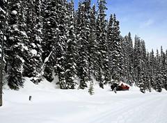 La randonnée! (Imagin.air) Tags: hiver winter snow nature cheval horses