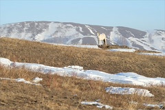Лошадка (Kirill & K) Tags: bannoye spring nature southernurals horse evening hill landscape банное март весна природа южныйурал горы холмы вечер пейзаж лошадь снег белая