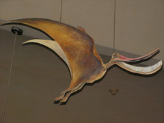 Flamingo pterosaur model (Pseudaustro guinazui Bonaparte, 1969); Mueso de La Plata, Argentina (sarracenia.flava) Tags: museodelaplata museum pterosaur pseudaustro flamingo