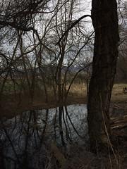 IMG_0592 (augiebenjamin) Tags: lakeviewparkway lakeshoredrive provo utah mountains provorivertrail trees spring winter spanishfork nebo bicentennialpark oremcity provocity utahvalley utahcounty oremarboretum