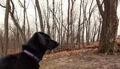Cortana (Tony Webster) Tags: frontenac frontenacstatepark lakepepin minnesota mississippiriver earlyspring forest leaves spring statepark trees