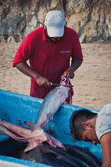 Fishermen Preparing Sharks in Mexiko (terbeck) Tags: mexico shark fishermen pacific mazunte sharks hai mexiko anglers angler terbeck
