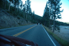 011 - Bison in the road (Scott Shetrone) Tags: animals events places yellowstonenationalpark bison mammals 7th anniversaries wymoing