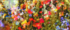 todays colors (Sunnyvaledave) Tags: flowers abstract colors