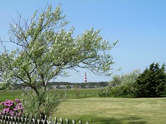 waaiboom (Sicco2007) Tags: ameland
