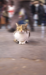 Eye of the Storm (yian.huang) Tags: cat turkey raw nap spice istanbul busy bazaar