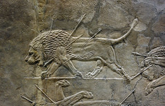 Lion Hunts of Ashurbanipal, dying male lion (profzucker) Tags: sculpture london art ancient iraq lion palace relief beginning britishmuseum gypsum tigris mosul hunt assyrian excavated ashurbanipal neoassyrian ninevah rassam 645bce