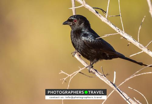 A black bird!
