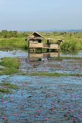 A hut and its blossoms (10b travelling) Tags: pink lake flower water asia asien southeastasia village burma blossoms hut myanmar inlelake asie southeast shan birma indochine shanstate birmanie taunggyi intha 2011 nyaungshwe  carstentenbrink iptcbasic thalaeoo