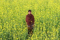 Sarson (hellosheraz) Tags: flowers pakistan boy field mustard middle lahore sarson