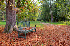 Bench in the autumnal park. (rglinsky) Tags: park wood travel autumn italy orange plant color tree green fall nature beauty yellow horizontal rural forest bench season landscape gold leaf stem italian alley europe european branch view natural outdoor seasonal scenic nobody scene september foliage lone lush deciduous footpath autumnal racconigi