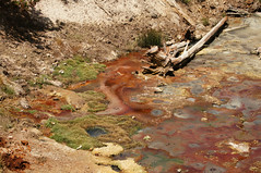 Mud Volcano (Tjflex2) Tags: yellowstonenationalpark wyoming geothermal hotsprings mudpots mudvolcano fumaroles