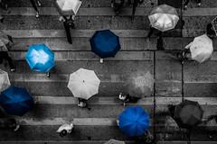Hong Kong   |   Shades of Blue (JB_1984) Tags: headcount blue people person umbrella rain drizzle crossing pedestriancrossing crosswalk mongkok yautsimmongdistrict kowloon kowloonpeninsula hongkong 香港 hongkongsar hk china nikon d7100 nikond7100 explore explored