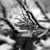 Nether Wood 66 - Frozen Heart (Adam Clutterbuck) Tags: somerset charterhouse mendips netherwood nether wood tree undergrowth landscape elements adamclutterbuck bw blackandwhite bn monochrome bandw bwsq sqbw blackwhite mono sq square showinrecentset uk unitedkingdom gb greatbritain britain england greengage lensbaby