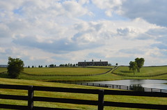 Horse Country (pjpink) Tags: horse fall field barn fence landscape pond kentucky ky country meadow september versailles vista 2013 pjpink