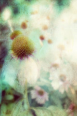 summer fades to memory (lucymagoo_images) Tags: flowers blue summer art texture photoshop garden artistic memories creative faded memory coneflower fade layers lucymagoo lucymagooimages