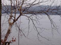11.17.13: Birch Over Water (Ruff Edge Design) Tags: trees overlay birch gaussianblur levelsadjusted maranacooklake
