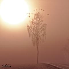 The takeoff (ankina) Tags: road morning sun mist tree fall birds norway canon ullensaker kløfta