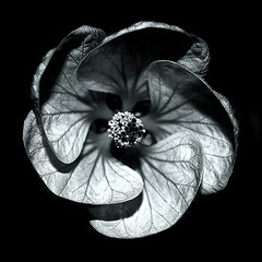 ... (Fuepix) Tags: lighting light bw naturaleza flower art nature fleur night contrast photography noche design nikon flickr shadows noiretblanc flor nb bn nuit mygearandme blinkagain fuepix
